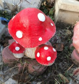 Тройной маленький гриб, купить в Крыму и Севастополе